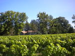 Vineyard Villa is from all sides surrounded by magnificant vineyards